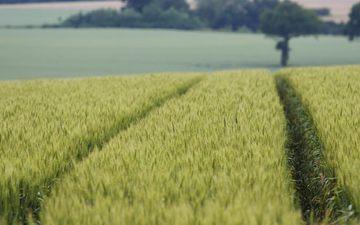 небо, дорога, природа, пейзаж, поле, пшеница, урожай, неба, автодорога