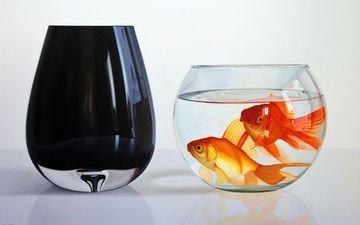 рыбы, стекло, аквариум, золотые рыбки, cтекло
