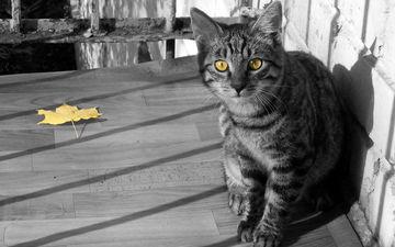 кот, кошка, взгляд, осень, лист, балкон, полосатый