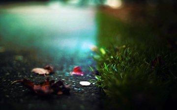 трава, природа, листья, макро, асфальт, монета
