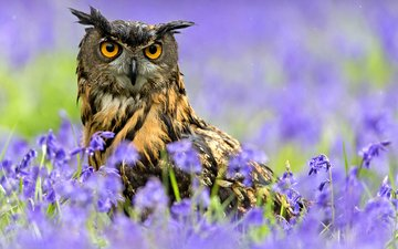 цветы, сова, цвет, птица, клюв, весна, дождь, перья, филин, столбик