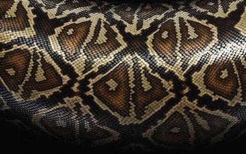 рисунок, змея, кожа, расцветка, питон, змеиная кожа