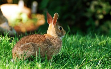 трава, заяц, зайчик