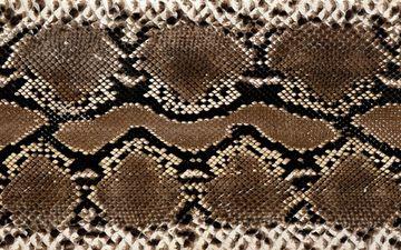 текстура, змея, кожа, расцветка, питон, змеиная кожа