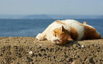 кот, мордочка, кошка, лежит, отдых