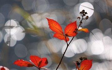 свет, листья, осень, блики, шиповник