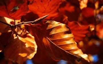 nature, leaves, macro, autumn, dry