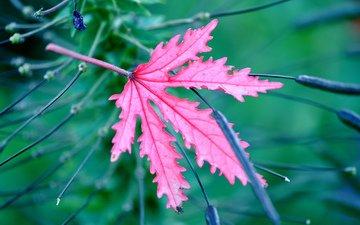 природа, макро, цвет, лист, растение