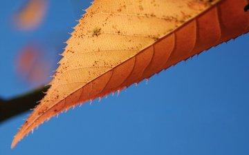 небо, природа, макро, осень, лист