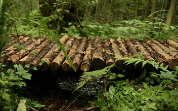 деревья, природа, растения, мостик, лес, макро, мост, речка, папоротник, бревна