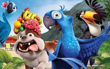 фрукты, собака, мультфильм, рио, попугаи