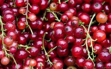 ягода, красная смородина, смородина, кислица