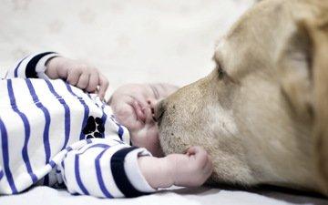 сон, собака, дети, дом, лицо, настроения, ребенок, друг, нежность, малыш, уют, rebenok, sobaka, domashnie zhivotnye