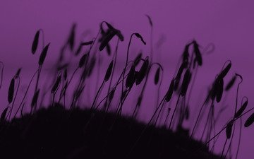 трава, природа, растения, макро, колоски, силуэт, ростки