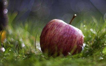 трава, природа, макро, роса, капли, фрукты, яблоко, красное