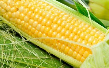 кукуруза, овощи, зерно, злаки, початок