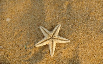 песок, морская звезда