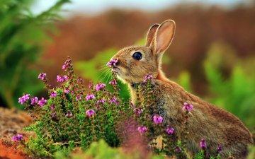 цветы, трава, животные, кролик, заяц