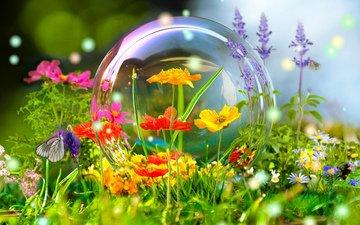 цветы, лето, бабочка, фотошоп, красиво, пузырь, шмель, 3д