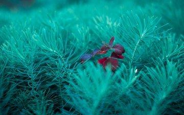 nature, plants, macro, summer