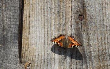 дерево, насекомое, бабочка, весна, тепло