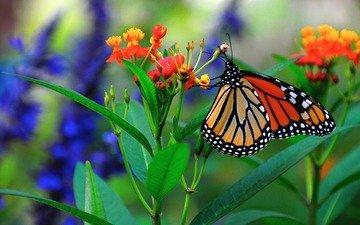 макро, цветок, бабочка, насекомые