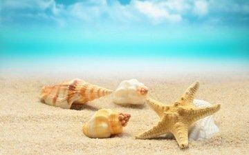 берег, волны, море, песок, пляж, лето, ракушки, морская звезда