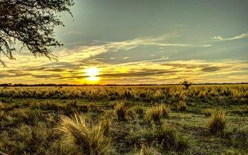 небо, трава, поле, горизонт, рассвет, аргентина
