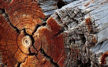 дерево, макро, фон, ствол, бревно