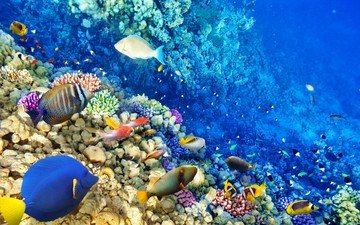 море, рыбы, океан, кораллы, риф, подводный мир