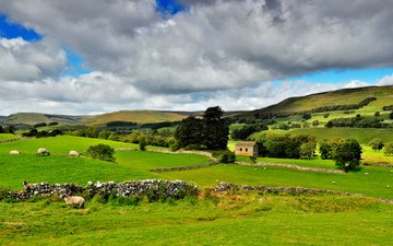 небо, деревья, природа, зелень, тучи, пейзаж, парк, животные, дом, овцы, северная англия, йоркшир-дейлз, национальный