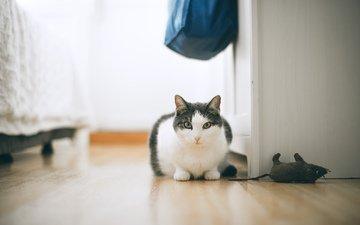 кот, кошка, комната, пол, домашние животные