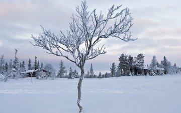 небо, облака, деревья, снег, зима, мороз, иней, домик, север, деревце