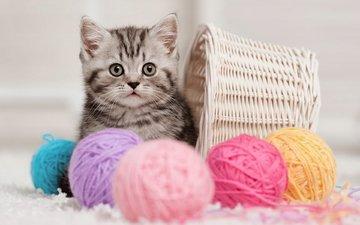 кошка, котенок, корзина, клубки, нитки