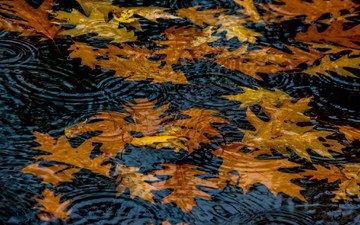 вода, природа, листья, осень, круги, лужа