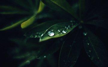 природа, листья, макро, роса, капли, зеленые, растение, dobraatebe