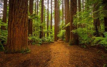 дорога, деревья, лес, листья, пейзаж, папоротник
