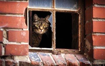 кот, кошка, взгляд, дом, окно, полосатый
