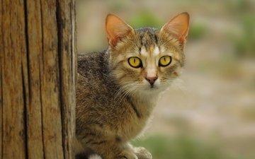 глаза, дерево, кот, кошка, уши, мех