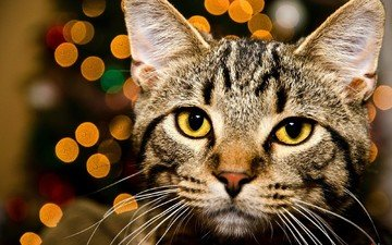 глаза, морда, огни, кот, кошка, взгляд, желтые, полосатый, боке