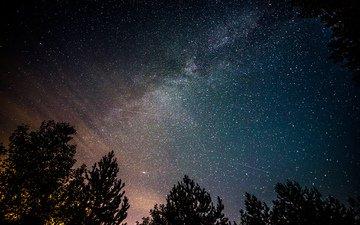 ночь, деревья, космос, звезды, млечный путь