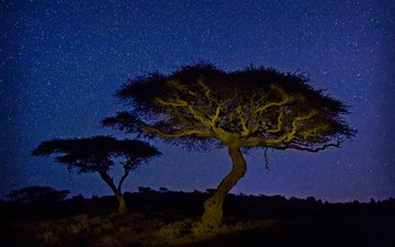 light, night, tree, stars, africa, kenya, acacia, wildlife conservancy