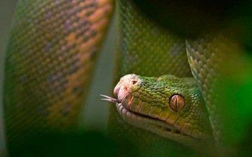 природа, макро, змея