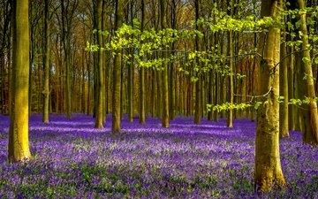цветы, деревья, природа, лес, листья, лаванда, ветки