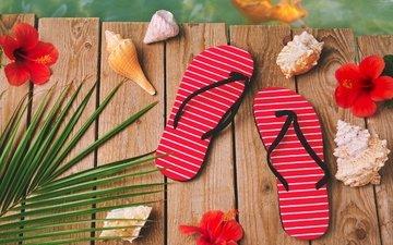 цветы, песок, пляж, лето, ракушки, морская звезда, песка, seashells, каникулы, сланцы, летнее, аксессуаров