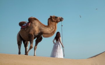 girl, animals, desert, camel