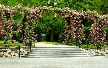цветы, деревья, лестница, ступеньки, парк, дорожка, кусты, розы, сша, навес, газон, longwood gardens