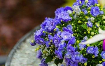 цветы, макро, синие, бутончики