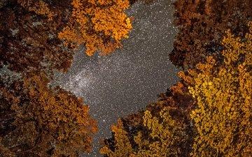 небо, деревья, фото, осень, фотограф, greg stevenson, ночное, звездное