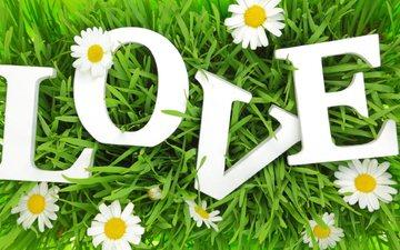 трава, буквы, любовь, ромашки, влюбленная